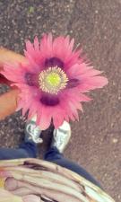 i fiori tra l'asfalto sono le sorprese più belle