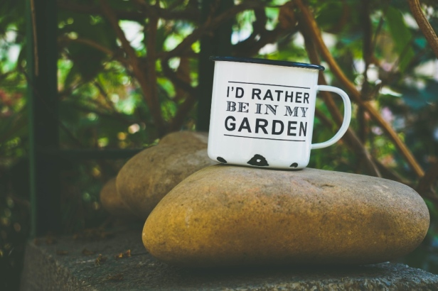 combattere le delusioni, prepararsi al meglio, stile zen, giardini e pensieri, il giardino cura pensieri, paguro Bernardo maestro di vita, arrabbiatura e serenità, komorebi, lost in transaltion, parole che illuminano
