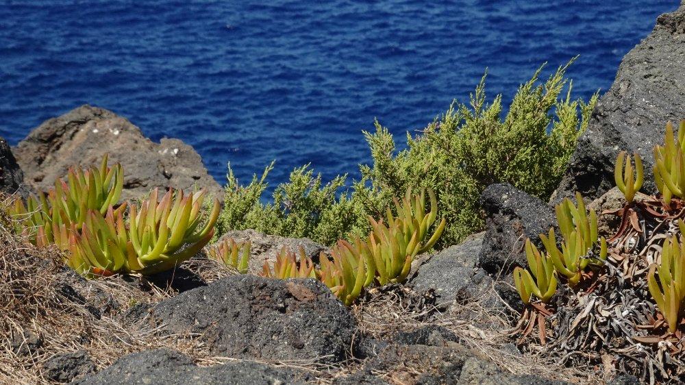 cambiamento e vento, la poetica dell'isola, ispirazioni dall'isola di Pantelleria, Pantelleria tra mito e poesia